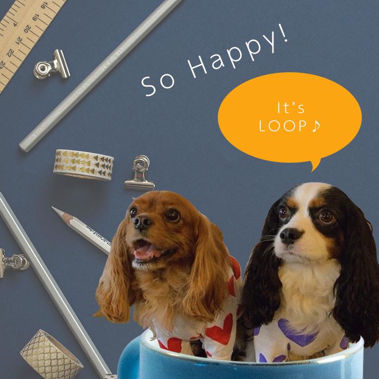 坂戸にある小さな雑貨屋さんLOOP(ループ)イメージ画像。看板キャバリア犬のルークとコッペが楽しい文具を眺めている画像。